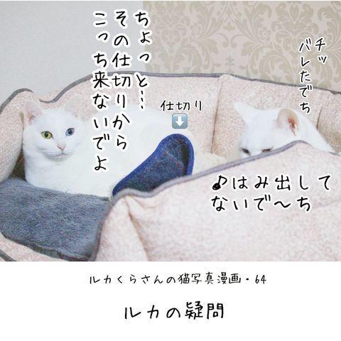 f:id:sangoruka_cats:20190221083140j:plain