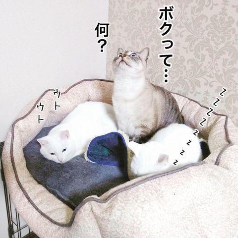 f:id:sangoruka_cats:20190221083141j:plain