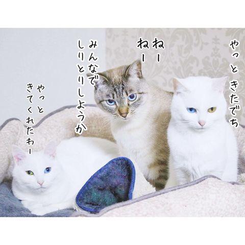 f:id:sangoruka_cats:20190221083142j:plain