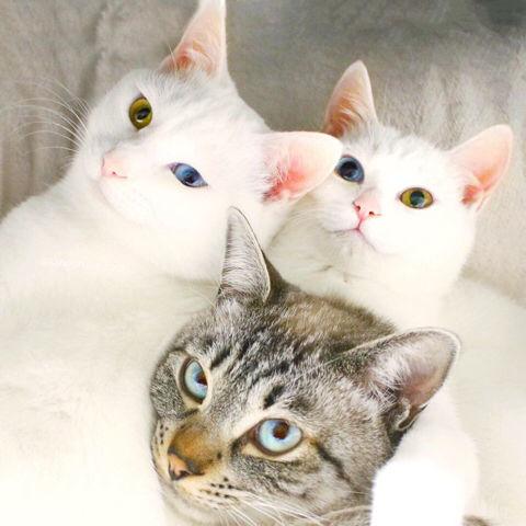 f:id:sangoruka_cats:20190223084548j:plain