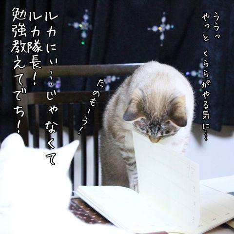 f:id:sangoruka_cats:20190223084550j:plain