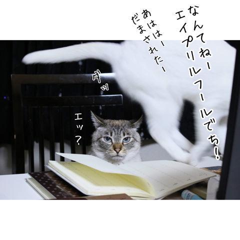 f:id:sangoruka_cats:20190223084552j:plain