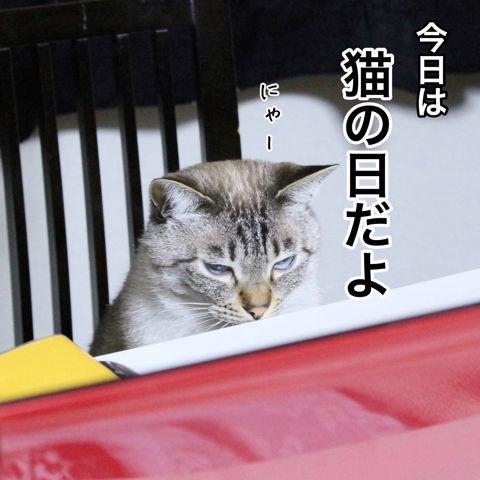 f:id:sangoruka_cats:20190223084554j:plain