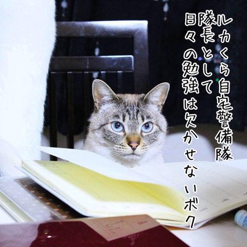 f:id:sangoruka_cats:20190223084555j:plain