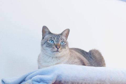 f:id:sangoruka_cats:20190301182959j:plain