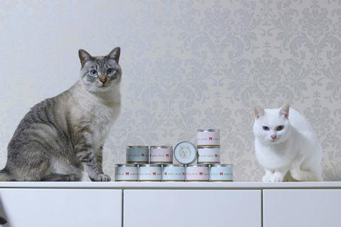 f:id:sangoruka_cats:20190301183000j:plain