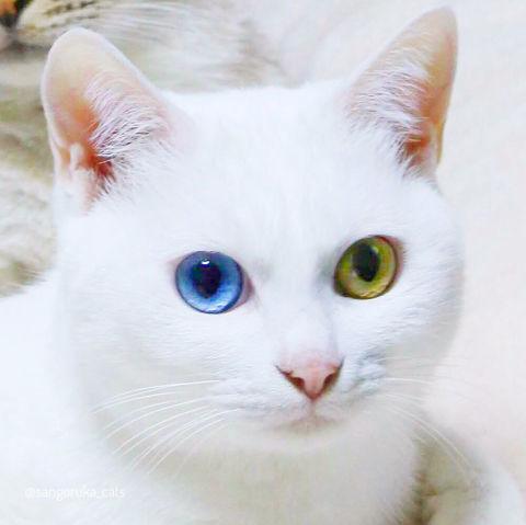 f:id:sangoruka_cats:20190303082343j:plain