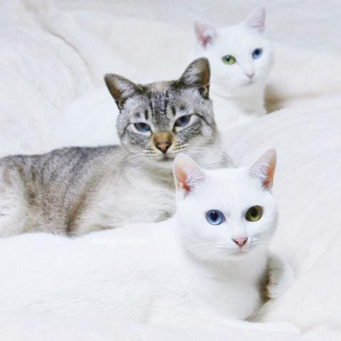 f:id:sangoruka_cats:20190303082344j:plain