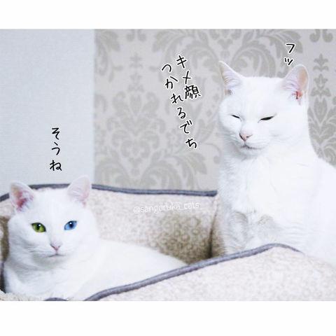 f:id:sangoruka_cats:20190303082345j:plain