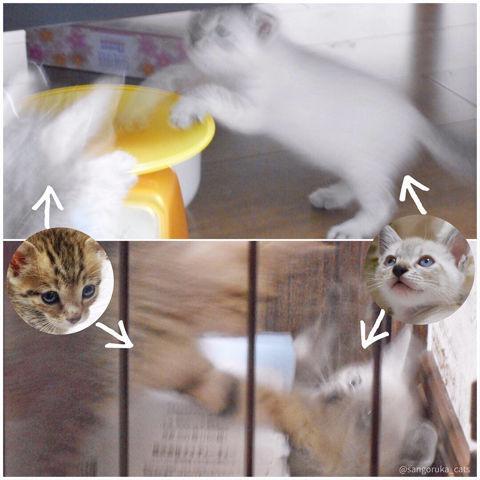f:id:sangoruka_cats:20190303082350j:plain
