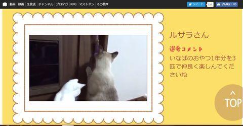f:id:sangoruka_cats:20190425002412j:plain