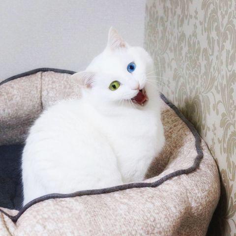 f:id:sangoruka_cats:20190509075632j:plain