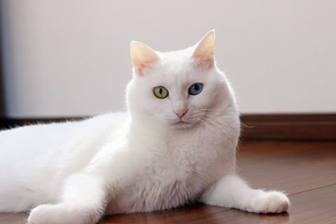 f:id:sangoruka_cats:20190524134928j:plain
