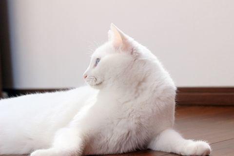 f:id:sangoruka_cats:20190524134929j:plain