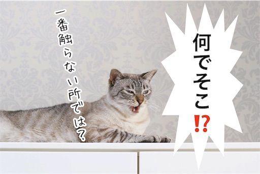 f:id:sangoruka_cats:20190806225709j:image