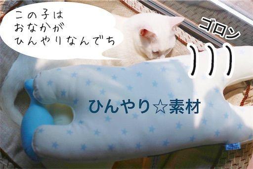 f:id:sangoruka_cats:20190806225712j:image