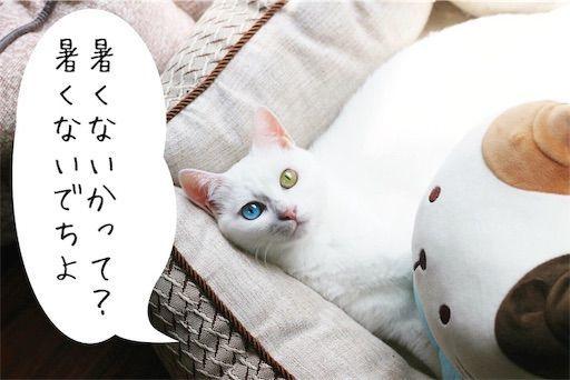 f:id:sangoruka_cats:20190806225714j:image