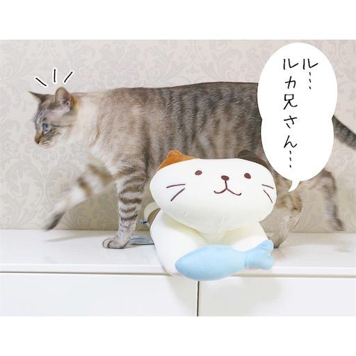 f:id:sangoruka_cats:20190809163144j:image