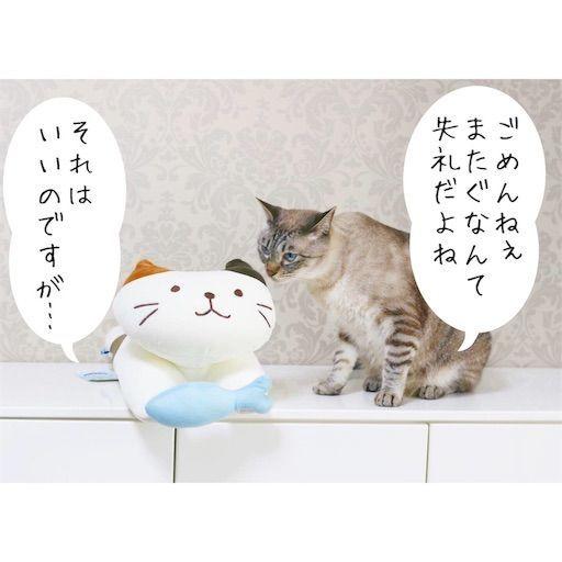 f:id:sangoruka_cats:20190809163148j:image