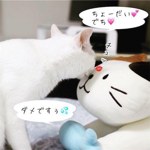 f:id:sangoruka_cats:20190809163152j:image