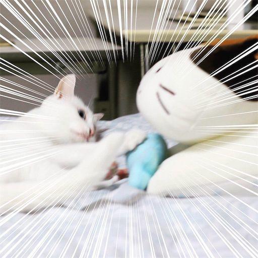 f:id:sangoruka_cats:20190809163158j:image