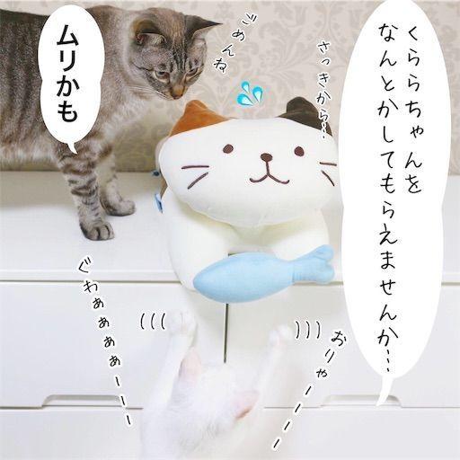 f:id:sangoruka_cats:20190809163201j:image