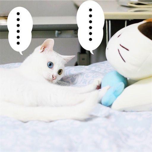 f:id:sangoruka_cats:20190809163204j:image