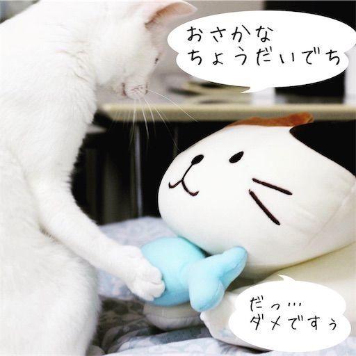 f:id:sangoruka_cats:20190809163208j:image