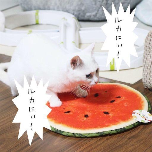 f:id:sangoruka_cats:20190813234133j:image