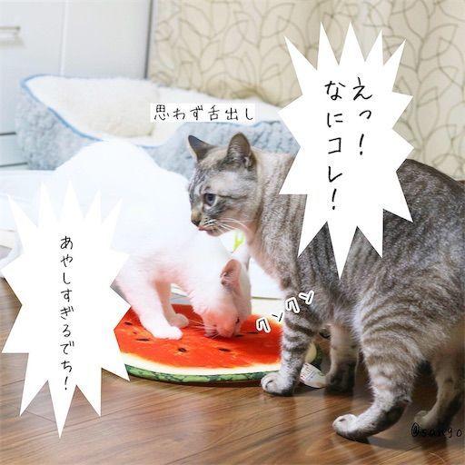 f:id:sangoruka_cats:20190813234250j:image