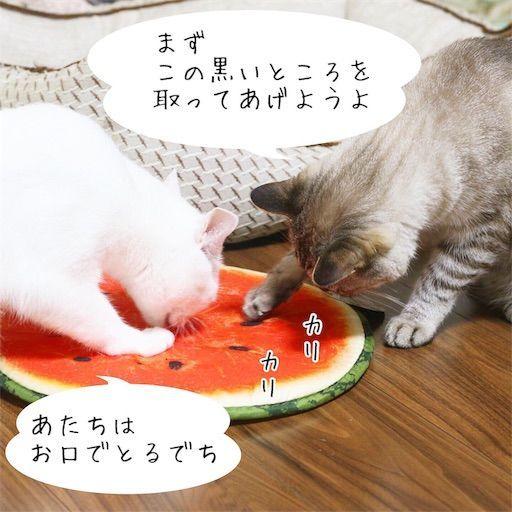 f:id:sangoruka_cats:20190813234259j:image