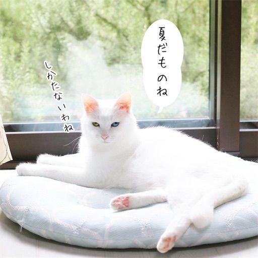 f:id:sangoruka_cats:20190813234303j:image