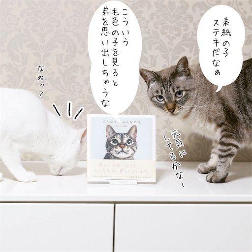 f:id:sangoruka_cats:20190816170429j:image