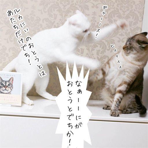 f:id:sangoruka_cats:20190816170433j:image