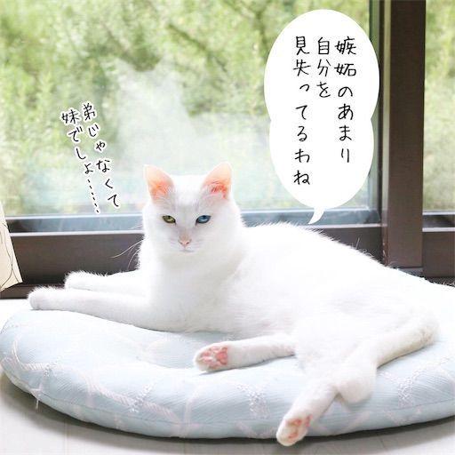 f:id:sangoruka_cats:20190816170437j:image