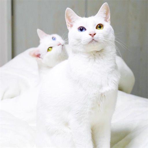 f:id:sangoruka_cats:20200119092406j:plain