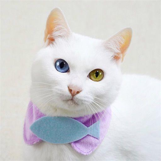 f:id:sangoruka_cats:20200119092408j:plain