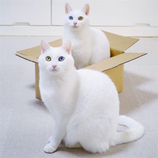 f:id:sangoruka_cats:20200119092412j:plain
