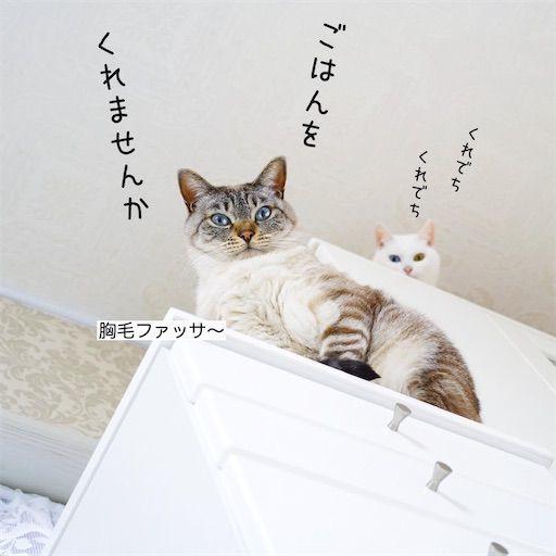 f:id:sangoruka_cats:20200122212759j:plain