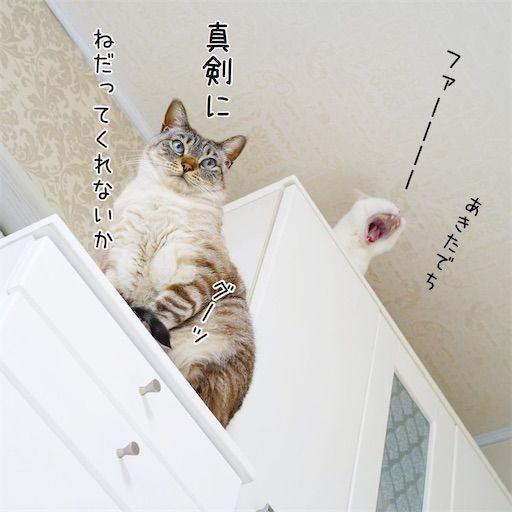 f:id:sangoruka_cats:20200122212802j:plain