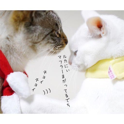 f:id:sangoruka_cats:20200122212924j:plain