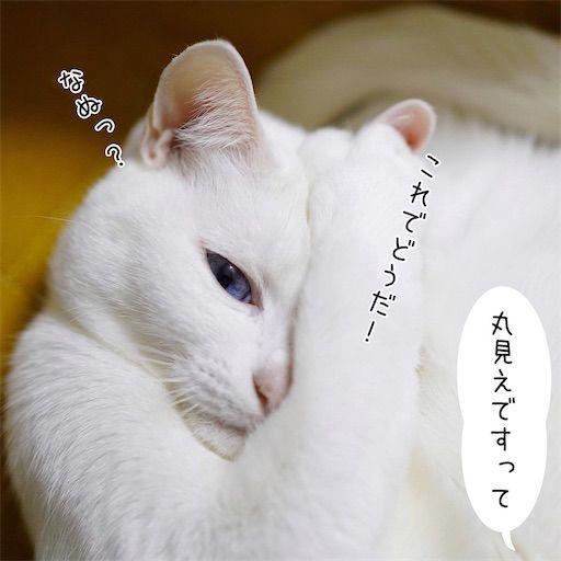 f:id:sangoruka_cats:20200214175012j:plain