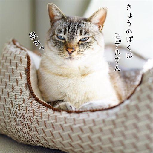f:id:sangoruka_cats:20200214175015j:plain