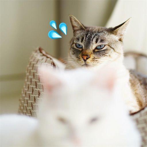 f:id:sangoruka_cats:20200214175019j:plain