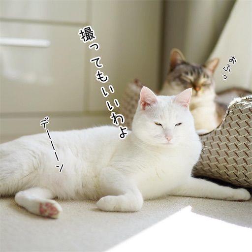 f:id:sangoruka_cats:20200214175022j:plain