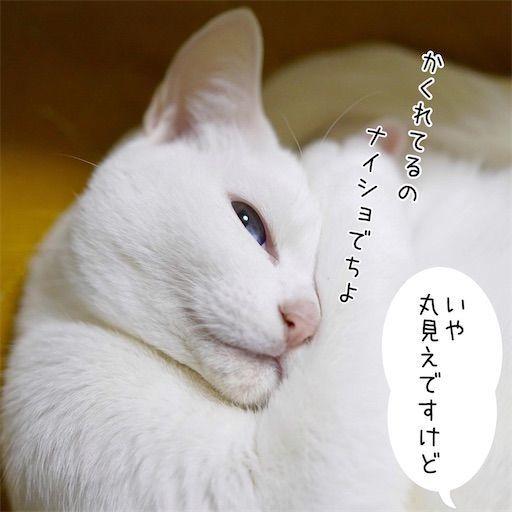 f:id:sangoruka_cats:20200214175026j:plain