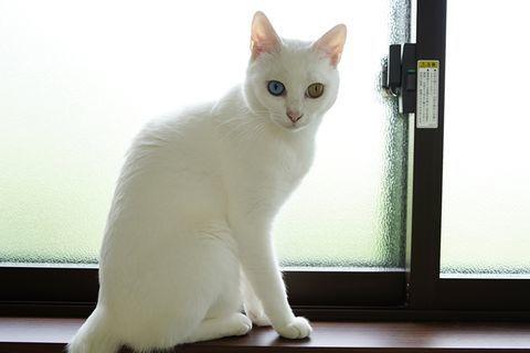 f:id:sangoruka_cats:20200625181006j:plain