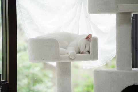 f:id:sangoruka_cats:20200625181010j:plain
