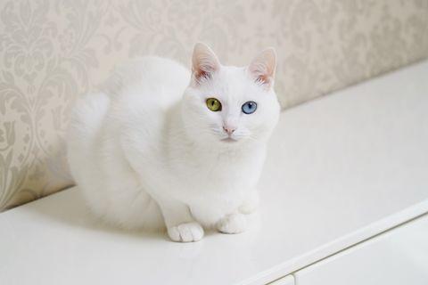 f:id:sangoruka_cats:20200625181015j:plain