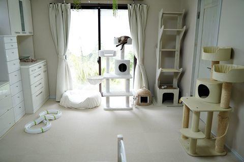 f:id:sangoruka_cats:20200625181400j:plain